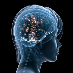 Memory Vitamins Acetyl L Carnitine